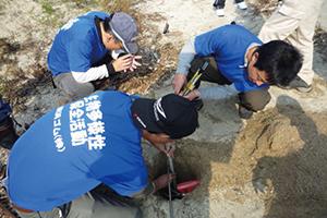 大湊海岸では海浜の形状調査や在来海浜植物の保全を行っています