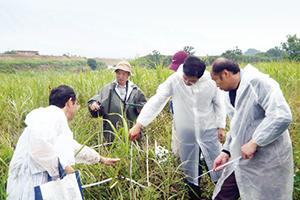 三島工場従業員による植生調査の様子